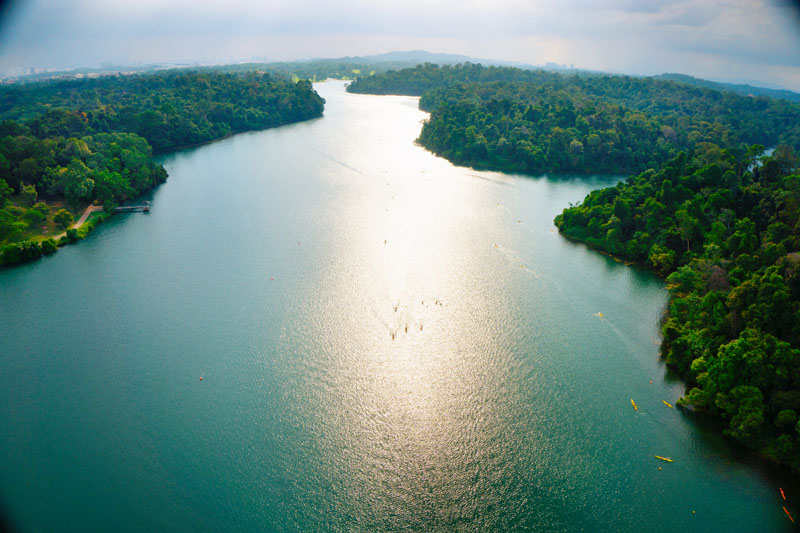 11 Must Do's in Singapore: MacRitchie Reservoir