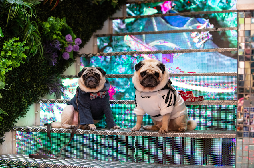 The Luxe List March 2019 - London Dog Week at M Restaurants