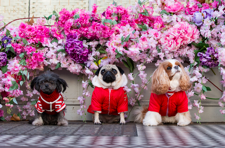The Luxe List March 2020: London Dog Week with Kiehls