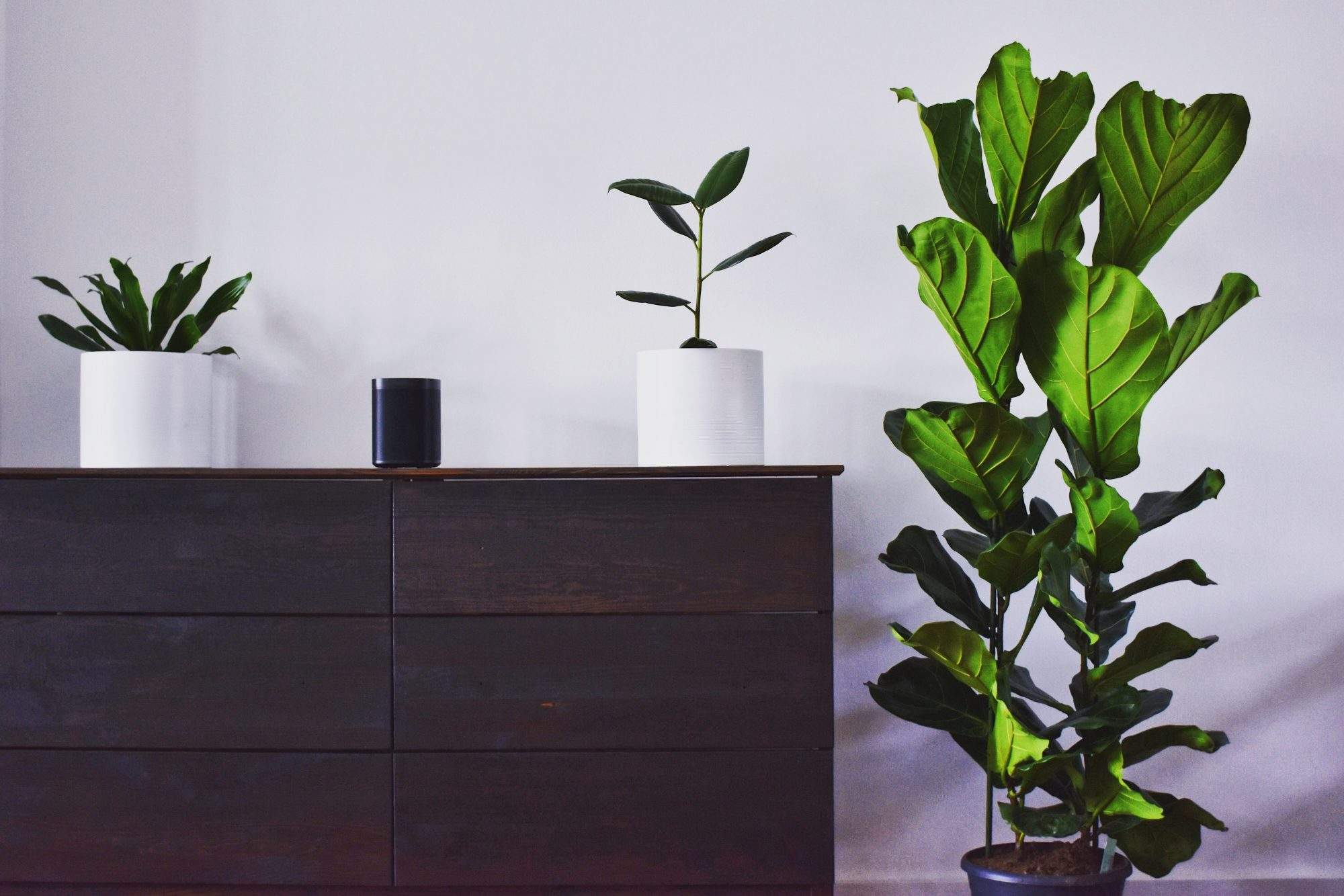 3 Ways to Bring a Touch of Nature into Your Home: Use houseplants to bring the outdoors in