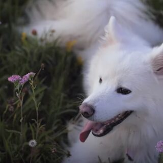 Paws For a Minute... With The First Ever Dog Meditation Video From SpareRoom