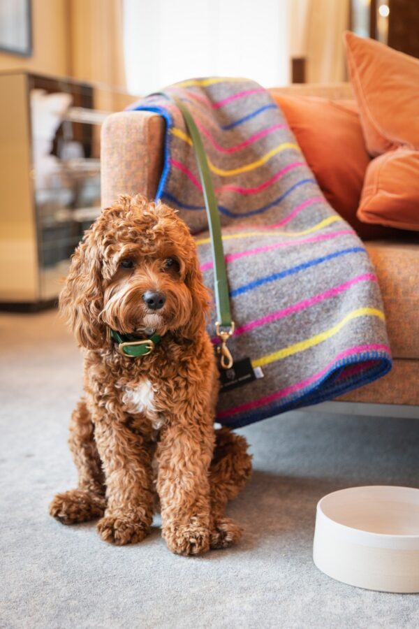 Well behaved dogs are as welcome at The Athenaeum Hotel as you are and their VIPup package is just £40 per stay